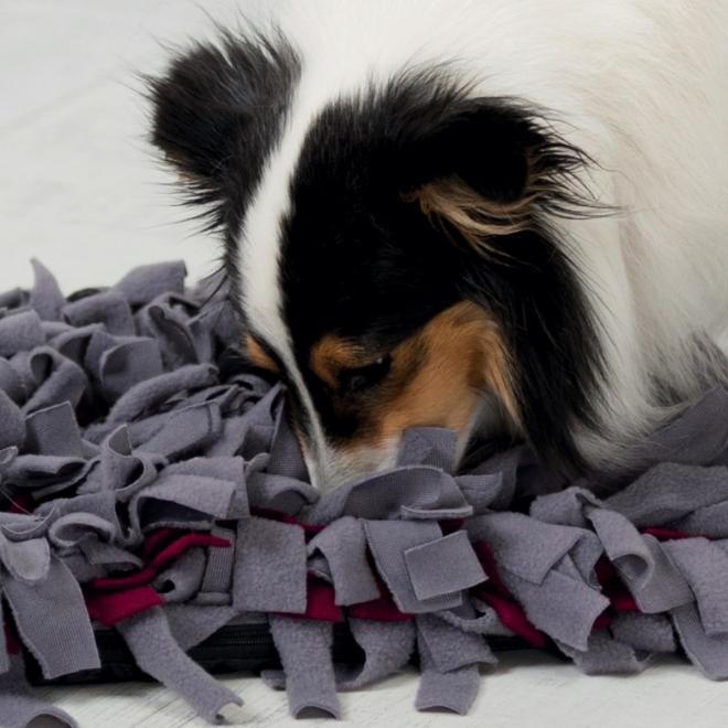 Aktivointimatto Trixie Sniffing Carpet
