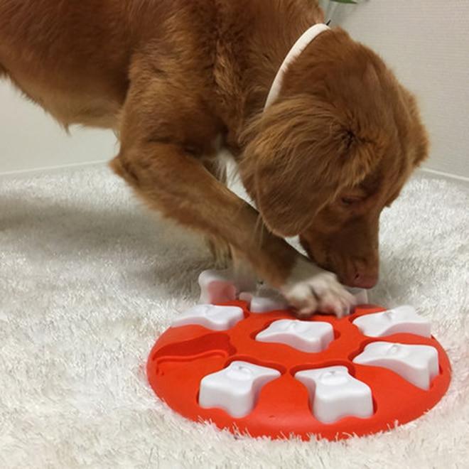 Aktivointilelu Dog Smart, oranssi