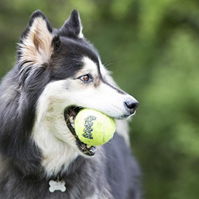 KONG Airdog Squaker Ball narulla, 6 cm