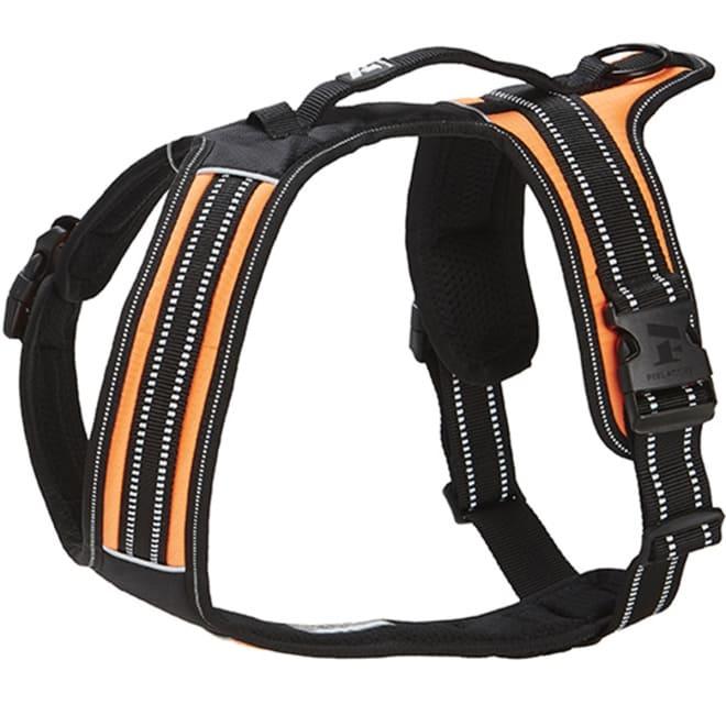 Koiran valjaat FA Sport, oranssi (XS)