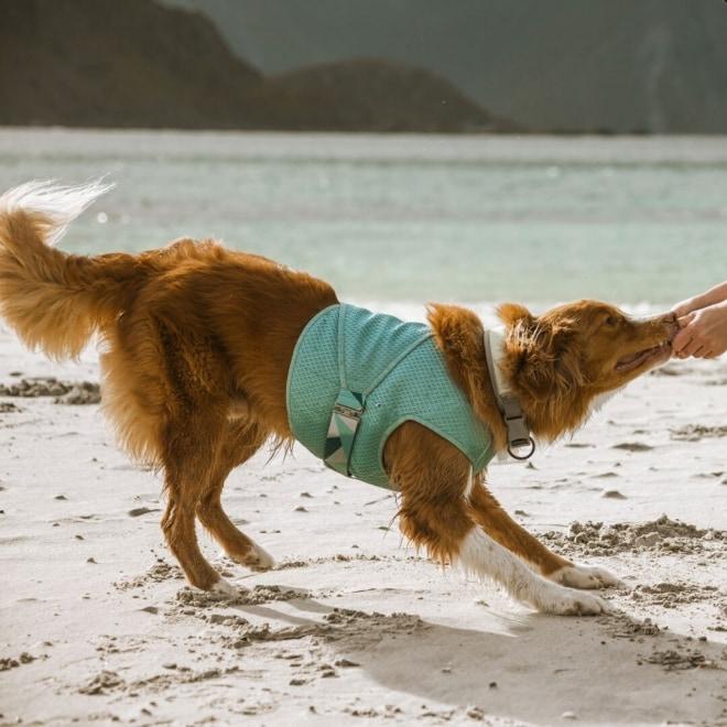 Koiran viilennysliivi Hurtta, minttu