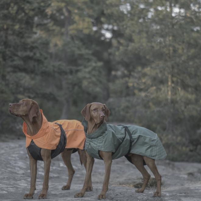 Koiran sadetakki FA Göteborg, oranssi