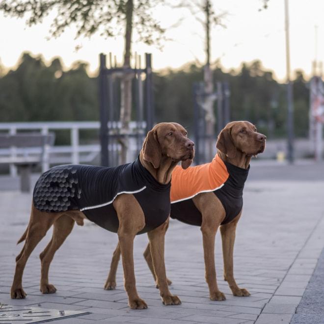 Koiran paita FA Tromso, oranssi