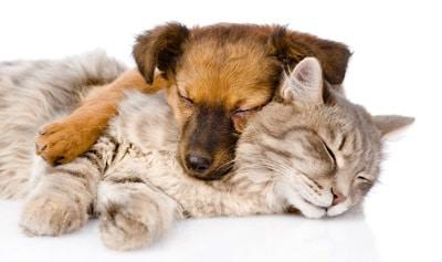 framework/dogcat.jpg