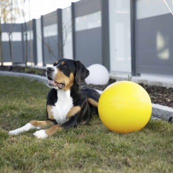 Kerbl Ball til Hund Hard Plast 30 cm