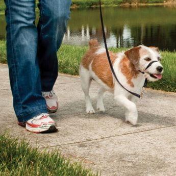 Petsafe Easy Walk Snutesele Svart