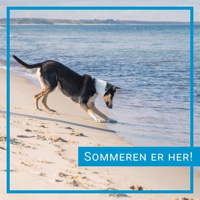 Sommerprodukter til hund med rask levering!