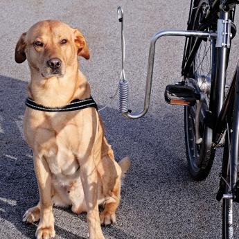 Dogman Cykelfäste för Hund