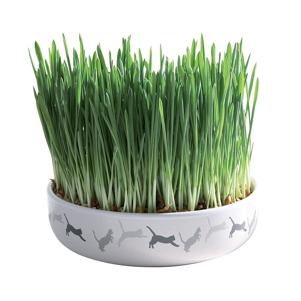 Trixie Keramikskål med kattgräsfrön
