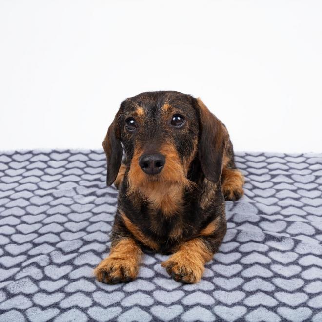 Little&Bigger Smooth Hundfilt Grå